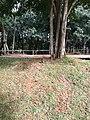 Parque da Cidade - Jundiaí - panoramio (89).jpg
