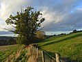 Pastures, Winchcombe - geograph.org.uk - 1032968.jpg