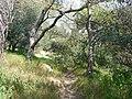 Path on Filopappos Hill, Athens - panoramio.jpg
