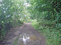 Path through Gorsey Leys - 2 - geograph.org.uk - 1429529.jpg
