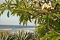 Paysage de lîle de la Réunion (4117367459).jpg