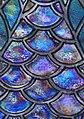 Peacock (3332708807).jpg