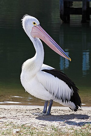 Pelican lakes entrance02 edit.jpg