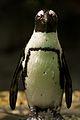 Penguin (13945307762).jpg
