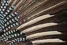 Pennaceous feathers by Garrulus glandarius.jpg