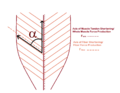 Pennation angle of fibers in pennate muscle.png