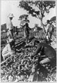 People working among tobacco plants, Rhodesia LCCN89714079.jpg