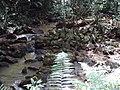 Pequeno arroio Henrique - panoramio.jpg