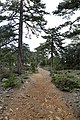 Persephone Nature Trail, Troodos, Cyprus - panoramio (42).jpg