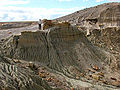 Petrified-wood-1.jpg