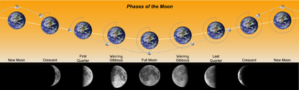 Phases of the Moon.png