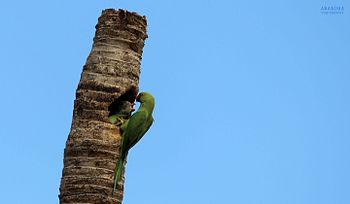 Photo parrot tm.jpg