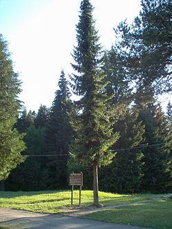 Zaštićeno bilje 250px-Picea_omorika2