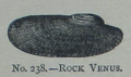 Picture Natural History - No 238 - Rock Venus.png