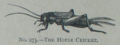 Picture Natural History - No 275 - The House Cricket.png