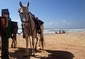 PikiWiki Israel 37325 Horses - Israel National Trail.jpg
