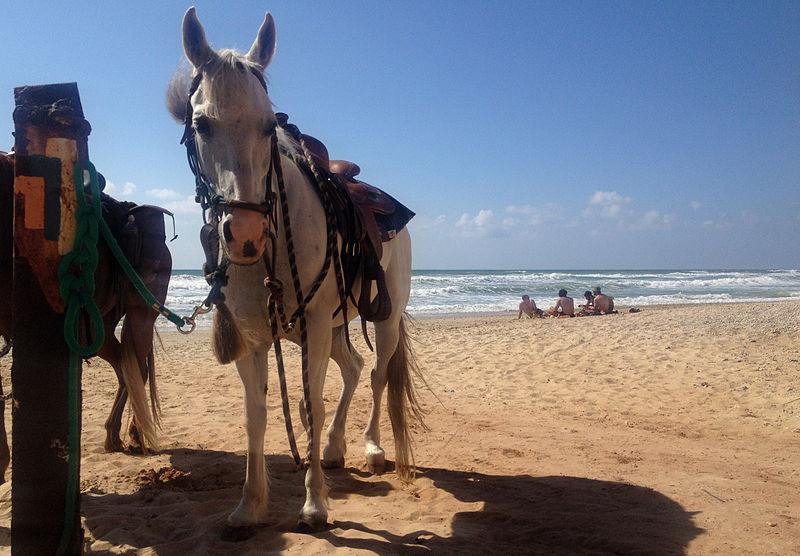 סוסים על שביל ישראל