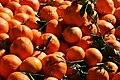 PikiWiki Israel 539 mandarines מנדרינות.JPG