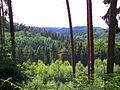 Pirmannswald bei Lautzkirchen 02 2010-06-18.JPG