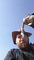 Plains Garter Snake - Flickr - GregTheBusker (1).jpg