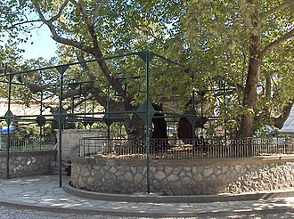 "Platanus orientalis - The ""Tree of Hippocrates"" in Kos, Greece, possibly a descendant of the original."