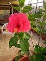Plants at Bijalinagar 92.jpg