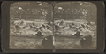 Playful as kittens - sea lions, Central Park, N.Y., U.S.A, by R. Y. Young.png