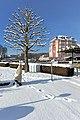 Poertschach Johannes-Brahms-Promenade Hotel Astoria Platane 29122014 912.jpg