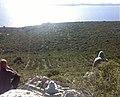 Pogled na dugi otok.jpg