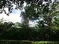 Polonnaruwa, Sri Lanka - panoramio (38).jpg