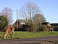 Ponies grazing at the junction of Wittensford Lane and Kewlake Lane - geograph.org.uk - 92943.jpg