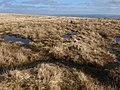 Pools above Mardle Head - geograph.org.uk - 1181934.jpg