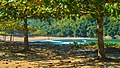 Praia do Camburi, Unidade de Conservação Núcleo Picinguaba - Imagem 05.jpg