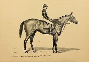 Preakness (horse) - Image: Preakness