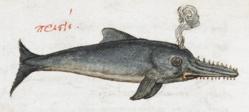 Pristis - Burney MS 97.png