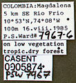 Pseudomyrmex elongatus casent0005874 label 1.jpg