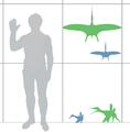 Pterodactylus scale mmartyniuk wiki.png