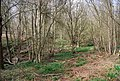 Puckden Wood (2) - geograph.org.uk - 1261743.jpg