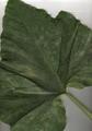 Punken-leaf.png