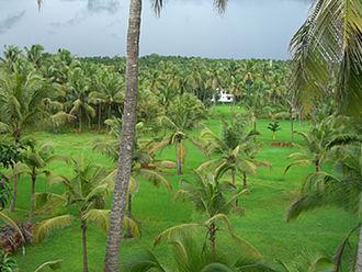 Anthoor -  A view of Punnakkulangara Village