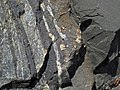 Pyrite crystals in magnetite-quartz banded iron formation (Temagami Iron-Formation, Neoarchean, ~2.736 Ga; Temagami North roadcut, Temagami, Ontario, Canada) 7 (40841856863).jpg