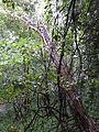 RNR du bois d'Encade dans la Vallée du Marbre (11).jpg