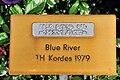 Rapperswil - Duftrosengarten - Harmonie Blue River TH Kordes 1979 2010-06-25 18-35-16.JPG