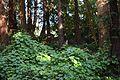 Redwood Memorial Grove 31 2017-06-12.jpg
