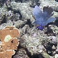 Reef 19 (4385903142).jpg