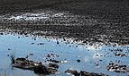 Reflection of sky in a plowed field.jpg