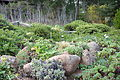 Regional Parks Botanic Garden - Berkeley, CA - DSC04507.JPG
