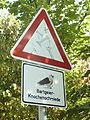 Regionalpark-RheinMain-Safari Bartgeier 01.jpg