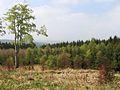 Reinhardswald westblick vom staufenberg ds wv 04 2009.jpg