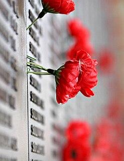 Les FLOUS 247px-Remebrance_poppy_ww2_section_of_Aust_war_memorial